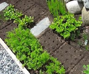 seeding-square